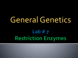Lab # 7 Restriction Enzymes