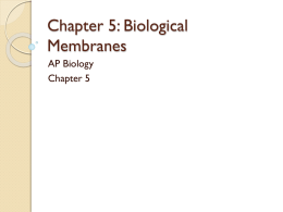 Chapter 5: Biological Membranes