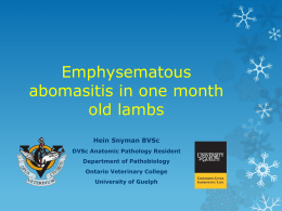 Emphysematous abomasitis in month old lambs