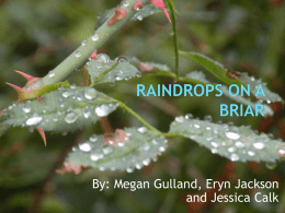 Raindrops on a Briar 1A