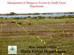 Management of Mangrove Forests by Sindh Forest - WWF
