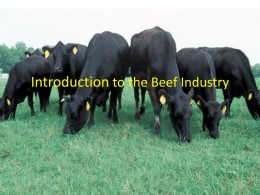 Introduction to the Beef Industry