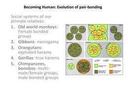 Becoming Human: Evolution of pair