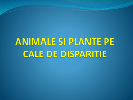 animale si plante pe cale de disparitie