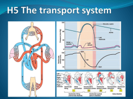 H 5 - The transport system - IBDPBiology-Dnl