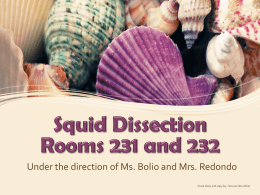 Click here for the Squid Dissection