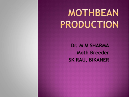 MOTHBEAN PRODUCTION
