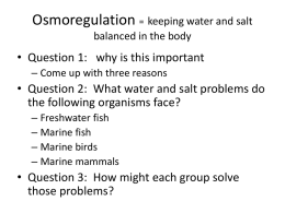 Osmoregulation = keeping water and salt balanced in the body