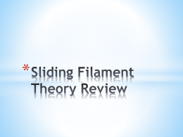 Sliding Filament Theory Review