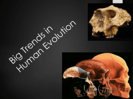 Six Big Events in Human Evolution