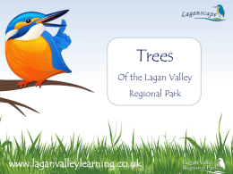 Trees PowerPoint - Lagan Valley Learning