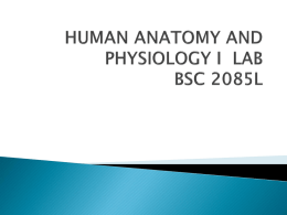 HUMAN ANATOMY AND PHYSIOLOGY I LAB BSC 1085L