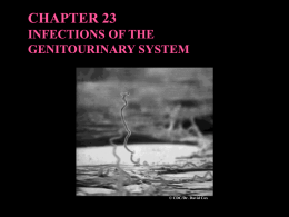 CHAPTER 23 INFECTIONS OF THE GENITOURINARY SYSTEM