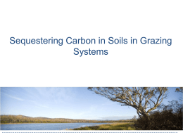 Sequestering Carbon in Soils in Grazing Systems