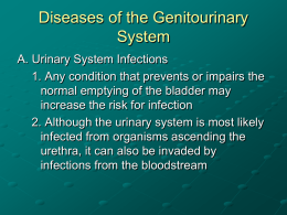 Diseases of the Genitourinary System PowerPoint