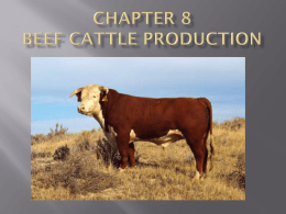 Chapter 8 Beef Cattle Production