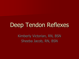 Deep Tendon Reflexes