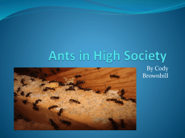 Ants in society by Cody B