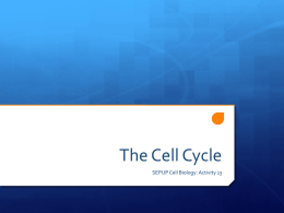 The Cell Cycle - Siegel Science
