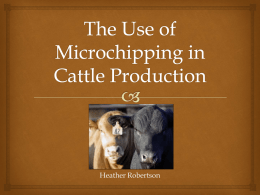 The Use of Microchipping in Cattle Production