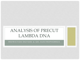LAB-Analysis of Precut Lambda dna