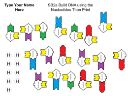 SB2a Build DNA using the Nucleotides Then Print