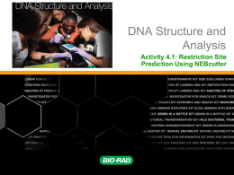 Activity 4.1 Restriction Enzymes