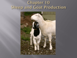 Chapter 10 Sheep and Goat Production