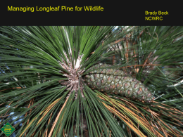 Managing Longleaf Pine for Wildlife Powerpoint