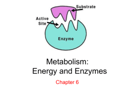 Ch 6 Metabolism_ Energy and Enzymes
