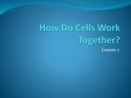 How do Cells Work Together?
