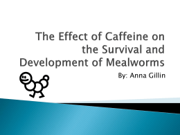 The Effect of Caffeine on the Survival and Development of Mealworms