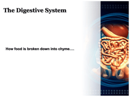 Digestive System - The Science Queen