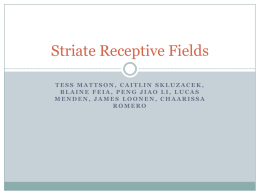 Other Receptive-Field Properties