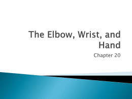 The Elbow, Wrist, and Hand
