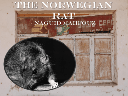 The Norwegian Rat - English II with Mr. Davis