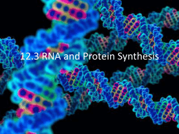 12.3 RNA and Protein Synthesis