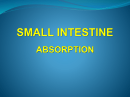 small intestine absorption