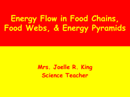 7-4.2 - Food Chains Food Webs and Energy Pyramids
