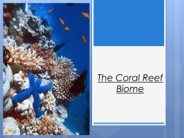 The Coral Reef Biome