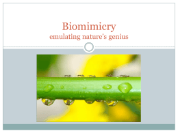 Biomimicry emulating nature*s genius