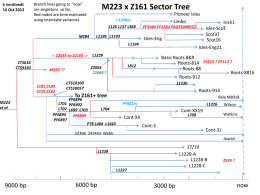 Tree for M223 x Z161..