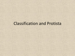 Classifcation and protista powerpoint