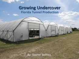 Growing Undercover Florida Tunnel Production