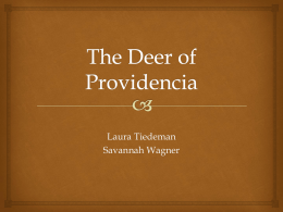 The Deer of Providencia
