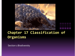 Classification of Animals (classificationsection1)