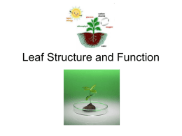 Leaf Structure and Function.ppt - CIA-Biology-2011-2012