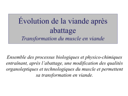 Transformation du muscle en viande