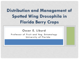 Distribution and Management of Spotted Wing Drosophila in Florida