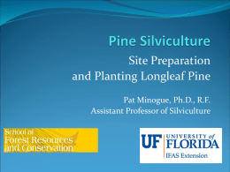 Site Preparation and Planting Longleaf Pine Powerpoint